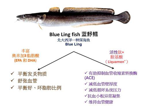 鱼类活胜肽+鱼油的协同作用