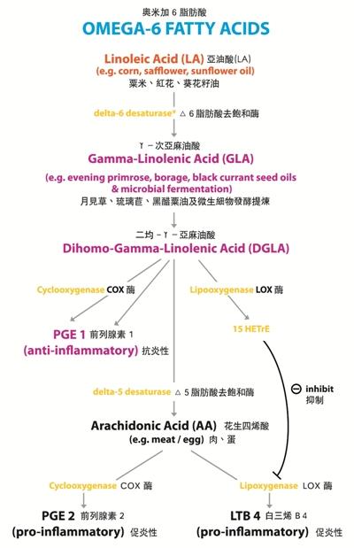 omega 6 chart