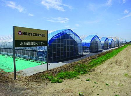 日本赤靈芝培植場